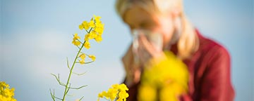 Yellow wildflowers with woman sneezing in background